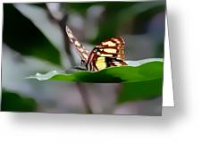Butterfly Planted Greeting Card