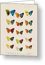 Butterfly Plate Greeting Card