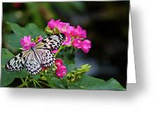 Butterfly Pollinating Flower Greeting Card