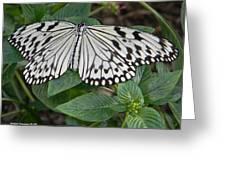 Asian Paper Kite Greeting Card