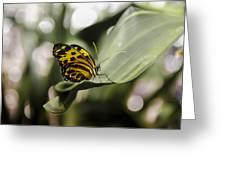 butterfly pose greeting card for salejimi albert