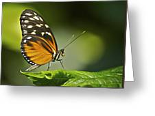 Butterfly Profile Greeting Card