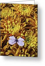 Butterfly Resting On Mums Greeting Card