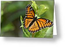Butterfly Scene Greeting Card