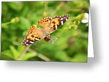 Butterfly Series 2 Of 5 Greeting Card