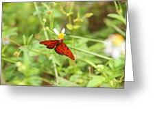 Butterfly Series 3 Of 5 Greeting Card