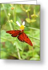 Butterfly Series 4 Of 5 Greeting Card