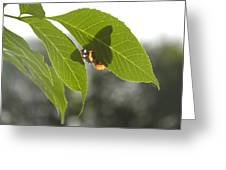 Butterfly Shadow Greeting Card