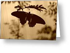 Butterfly Silhouette Greeting Card