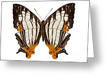 Butterfly Species Cyrestis Lutea Martini Greeting Card