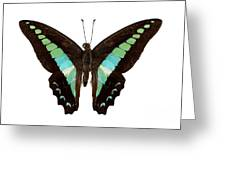 Butterfly Species Graphium Sarpedon Greeting Card