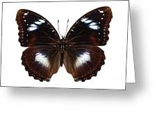 Butterfly Species Hypolimnas Bolina  Greeting Card