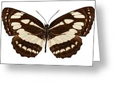 Butterfly Species Neptis Hylas  Greeting Card