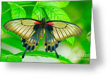 Butterfly Study #0064 Greeting Card by Floyd Menezes