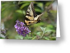 Butterfly Sucking On Some Pollen Greeting Card