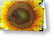 Butterfly Sunflower Greeting Card