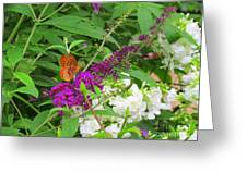 Butterfly Surprise Greeting Card