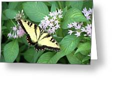 Butterfly - Swallowtail Greeting Card