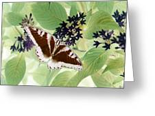 Butterfly - Swallowtail - Photopower 140 Greeting Card