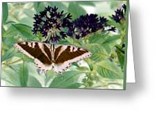 Butterfly - Swallowtail - Photopower 141 Greeting Card