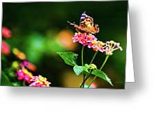Butterfly Three Greeting Card