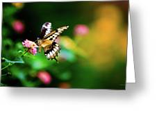 Butterfly Two Greeting Card