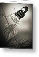 Butterfly Warm Black And White Greeting Card