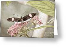 Butterfly Whisper Greeting Card