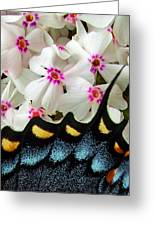 Butterfly Wing And Phlox Greeting Card