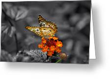 Butterfly Wings Of Sun Light Selective Coloring Black And White Digital Art Greeting Card