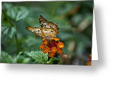Butterfly Wings Of Sun Light Greeting Card