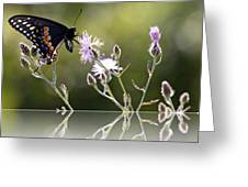 Butterfly With Reflection Greeting Card