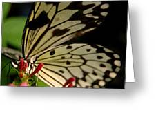 Butterfly World Greeting Card