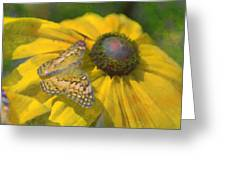Butterfly7 Greeting Card