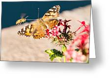 Butterfly's Friend Greeting Card