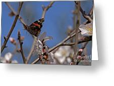 Butterfy In Almond Blossoms   #9289 Greeting Card