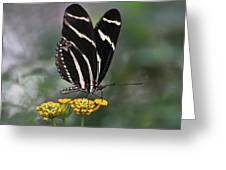 Butterly Greeting Card