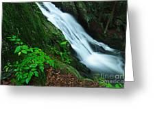 Buttermilk Falls Gorge Greeting Card