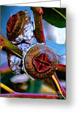 Pacific Northwest Washington Button Seed Pod Greeting Card