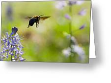 Buzz Off Greeting Card by Annette Hugen