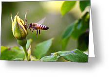 Buzz The Bee Greeting Card