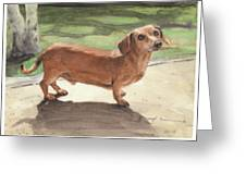 Buzz The Dachshund Watercolor Portrait Greeting Card