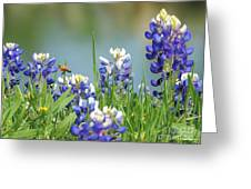 Buzzing The Bluebonnets 01 Greeting Card