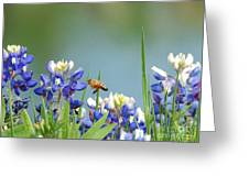 Buzzing The Bluebonnets 02 Greeting Card