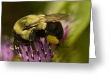 Buzzy Bee 2 Greeting Card
