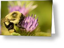 Buzzy Bee Greeting Card