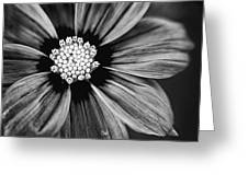 Bw Flower Art Greeting Card by Tammy Smith