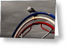 Bw Gull On Rwb Greeting Card