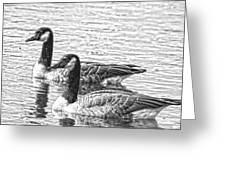 Bw Hdr Geese On The Pond I Greeting Card