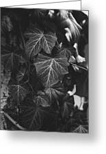 Bw Ivy Greeting Card